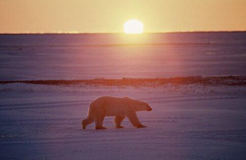 Русские школьники отыскали новый остров наархипелаге Новая Земля