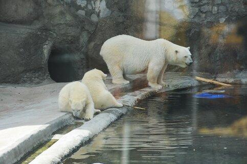 ВМосковском зоопарке установили дополнительные веб-камеры для наблюдения заживотными