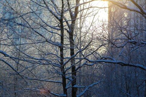 Небольшой снег идоминус 6-ти ожидается вМосковском регионе